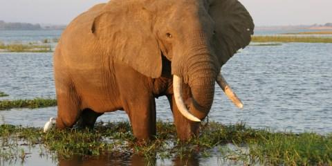 Parque Nacional de Mana Pools y zonas de safari de Sapi y Chewore