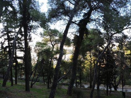 Bosques próximos al Monte Licabeto