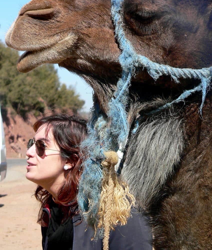 camellos-marruecos