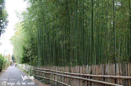 Bosque Bambú Arashiyama Kioto Japon