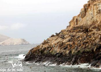 Excursión de un día a las Islas Palomino