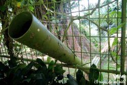 Bukit Merah Orangutan Foundation