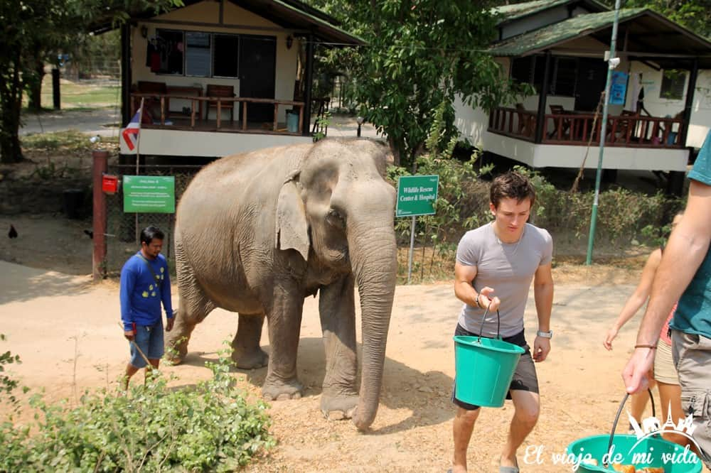 wildlife-friends-foundation-tailandia (10)
