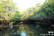 Los manglares de Black Cove Turtle, Galápagos