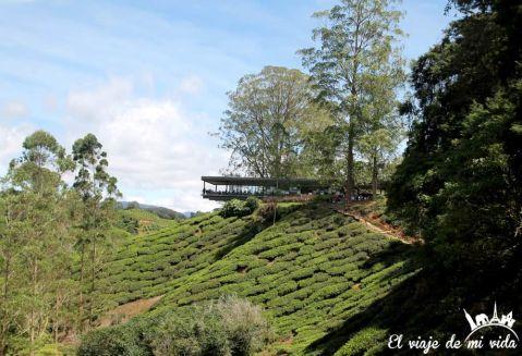 Fábrica de té en Cameron Islands