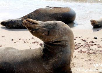 Crucero de 4 días por las Islas Galápagos