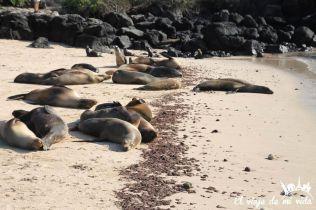 Leones marinos en Galápagos