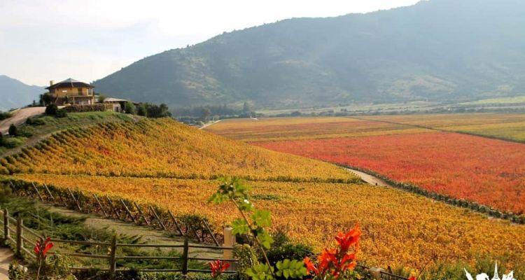 Viñedos Viña Santa Cruz en Chile