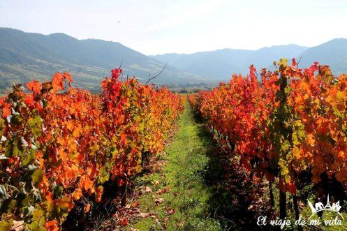 Los preciosos colores del otoño