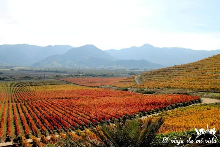 Viñedos de Chile