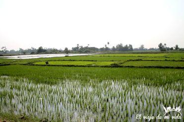 Los arrozales de Inwa, Myanmar