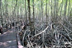 Los manglares de Pramburi, Tailandia