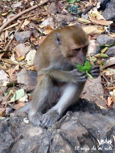 Los monos campando a sus anchas