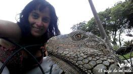 Las iguanas de Guayaquil en Ecuador