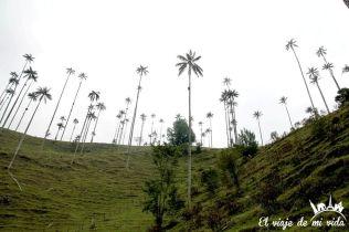 El Valle del Cócora y sus palmeras