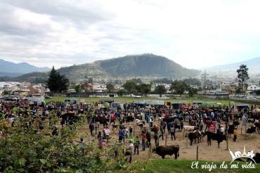 El mercado de ganado de Otávalo