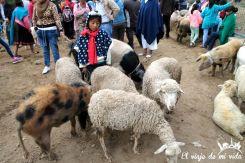 Caperucita y sus ovejas