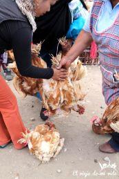 Pesando las gallinas