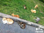 Gatos en la Plaza Kennedy