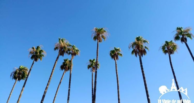 Palmeras de California