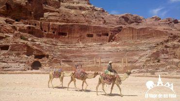 Los camellos en Petra