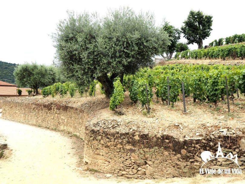 Los terrenos y muros tradicionales de Quinta da Roeda