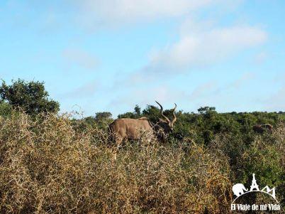 Parque Nacional Addo