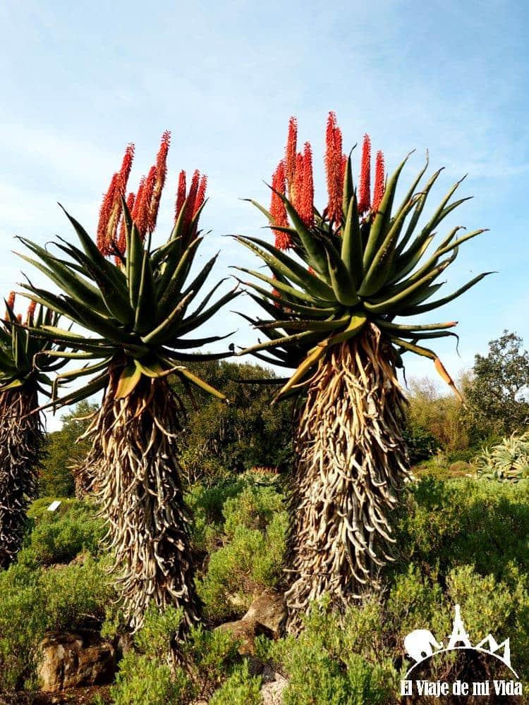 El Jardín Botánico de Kirstenbosch