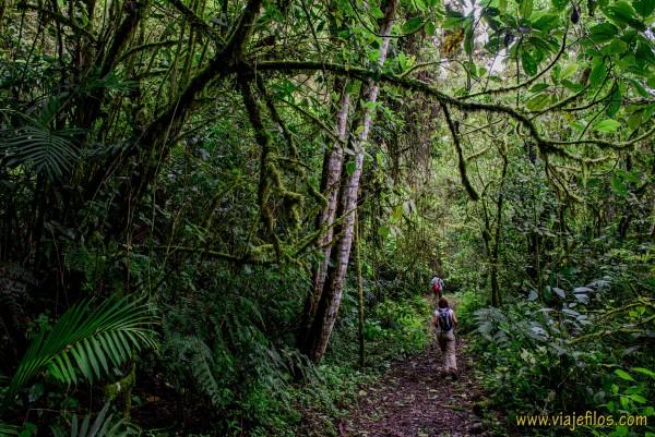 01 Viajfilos en Panama. Sendero Quetzal 03