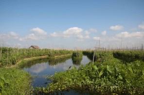 Lago Inle, floating gardens 01
