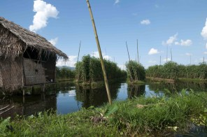 Lago Inle, floating gardens 02