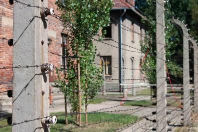 Auschwitz-005-copia