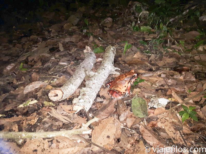 Fauna nocturna de la selva de la Amazonía peruana, tres dias de viaje en el Amazonas