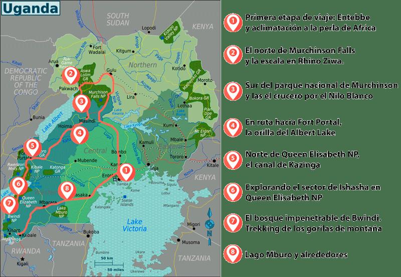 Como Organizar El Trekking De Los Gorilas De Montaña Viajefiloscom