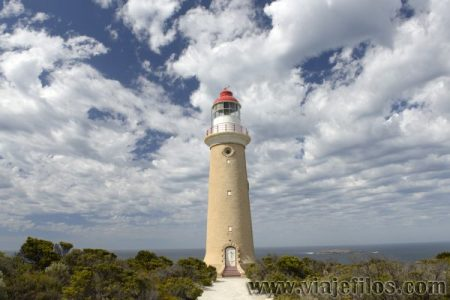 Viajefilos en Australia. Kangaroo 26
