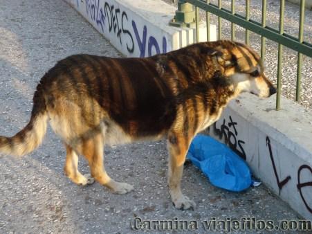 Viajefilos en Grecia, Atenas 030