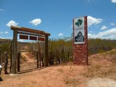 Floresta Petrificada - Missão Velha - Chapada do Araripe - Ceará (1)