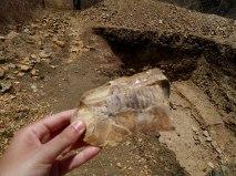 Fóssil, aparentemente de peixe