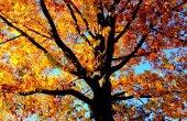 Arvores no outono em Nova York-001