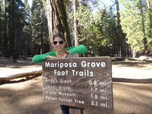 Mariposa Grove - De Monterey ao Yosemite National Park