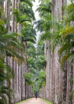 As Palmeiras do Jardim Botânico - Arvores Famosas