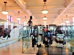 Dinossauros no Museu de Nova York de História natural