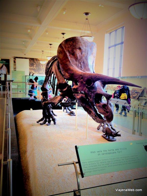 Dinossauros no Museu de História Natural de Nova York