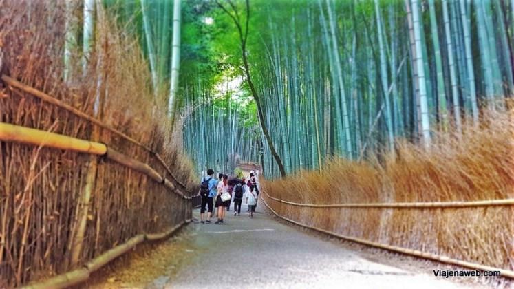 Roteiro de Viagem para o Japão Floresta de Bambu em Quioto