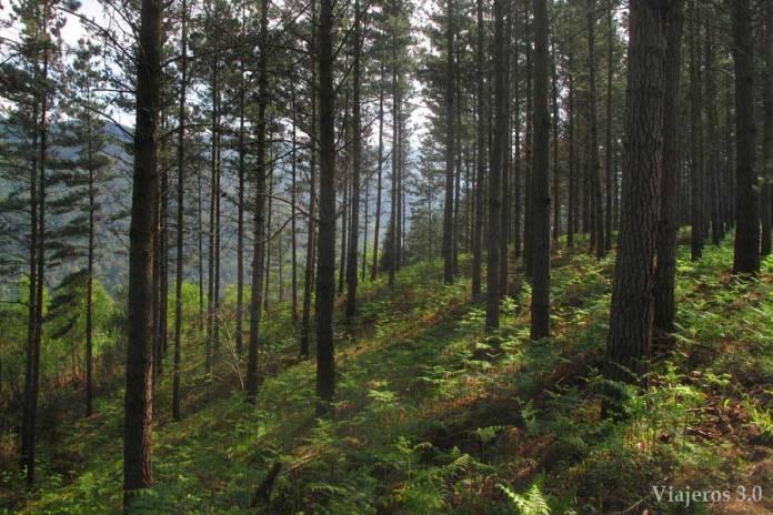 Que voir à Urdaibai, Grandma Forest