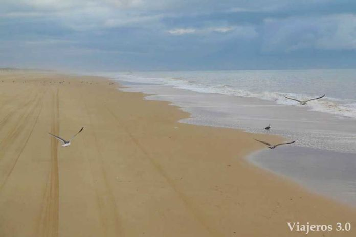 playa virgen en Doñana