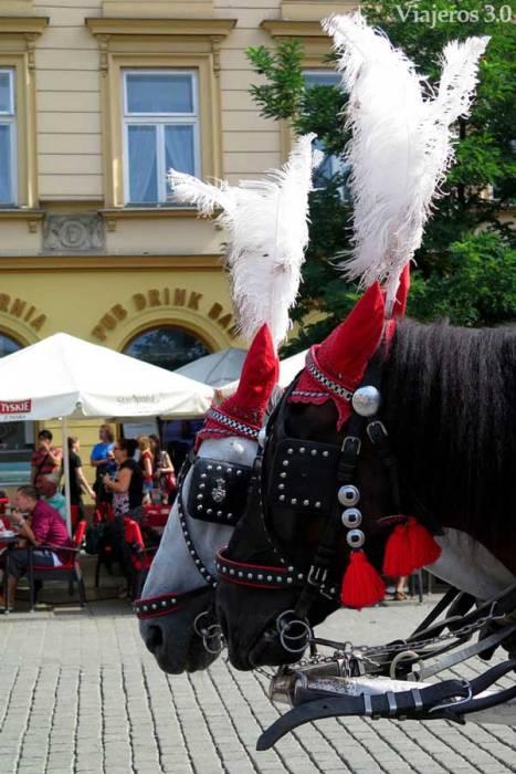 paseos a caballo en Cracovia