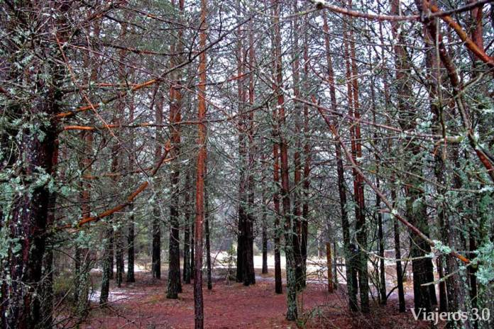 Forêt de printemps de la rivière Cuervo