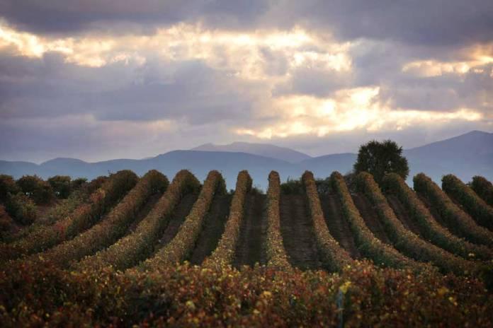 viñedos en La Rioja, lo mejor de La Rioja