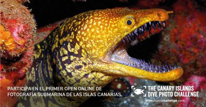concurso fotografía submarina Islas Canarias. Submarinismo y snorkel en Las Canarias.
